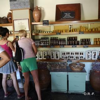 zielone winnice i staruszek 2